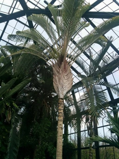 Longwood Palms