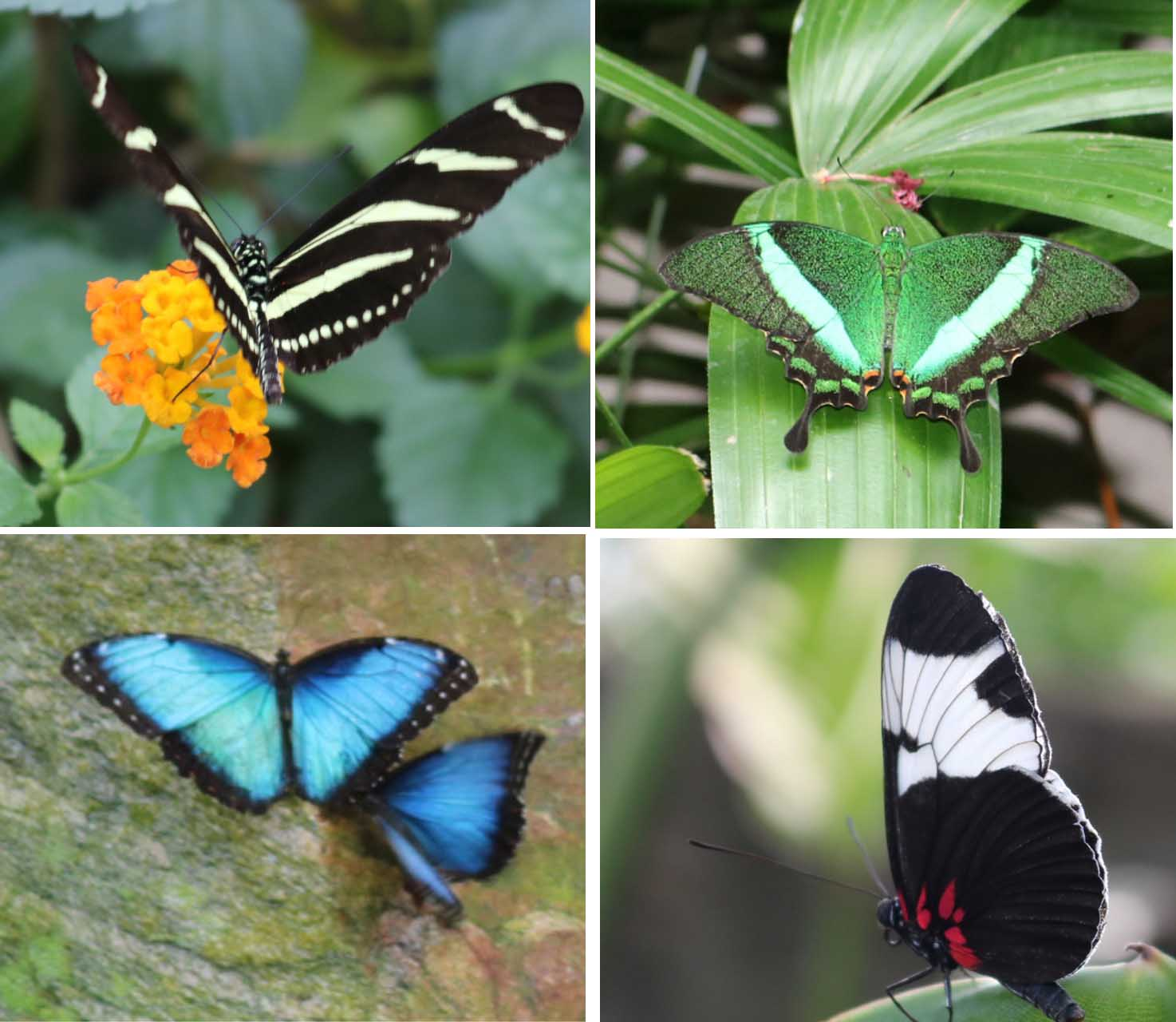 butterfly conservatory niagara falls rejinces. Black Bedroom Furniture Sets. Home Design Ideas